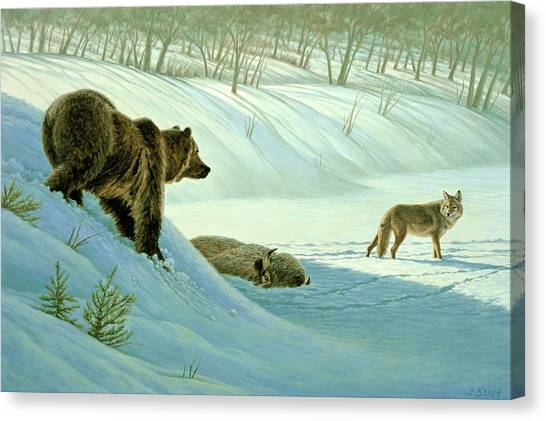 Yellowstone Canvas Print - Intimidation   by Paul Krapf