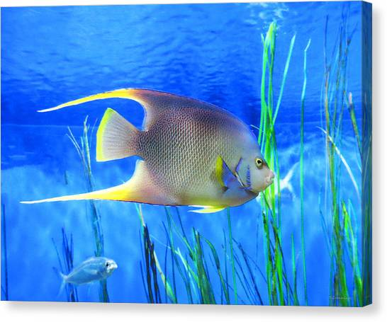 Fish Tanks Canvas Print - Into Blue - Tropical Fish By Sharon Cummings by Sharon Cummings