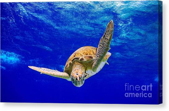 Into The Blue Canvas Print by Isabelle Kuehn
