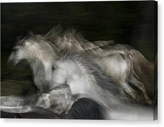 Horse Galloping Canvas Print - Into The Dark by Milan Malovrh
