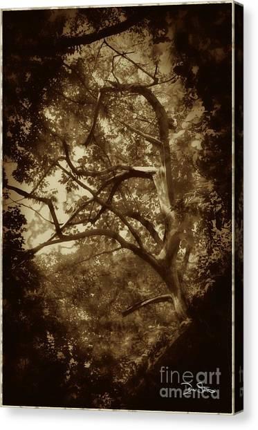 Into The Dark Wood Canvas Print