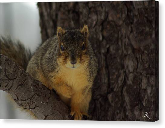Intrigued Squirrel  Canvas Print