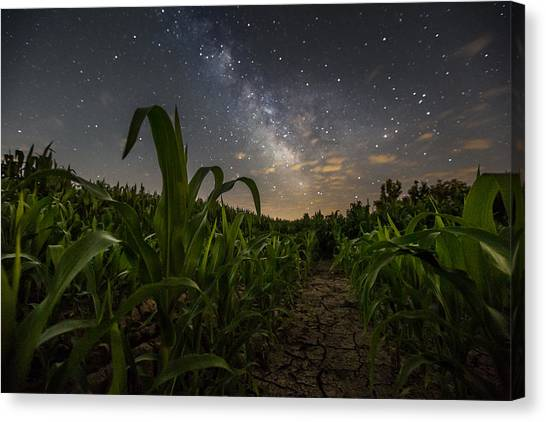 Iowa Corn Canvas Print