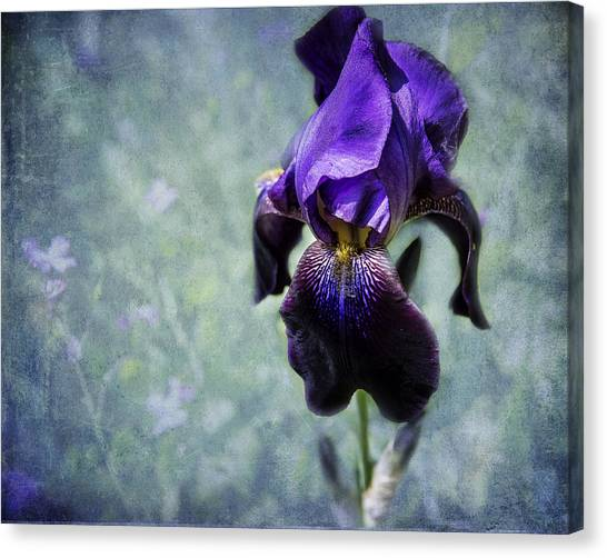 Canvas Print featuring the photograph Iris - Purple And Blue - Flowers by Belinda Greb