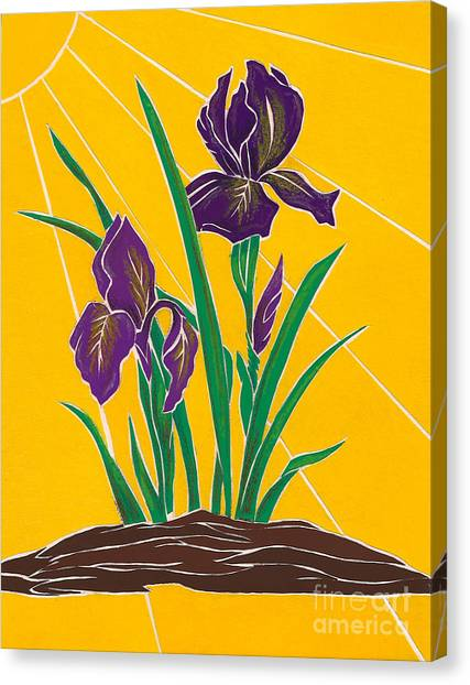 Iris 2 - In The Sun Canvas Print