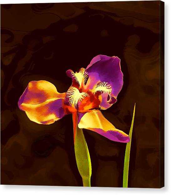 Siberian Iris Canvas Print - Iris And The Sunset Glamour Shot by Wendy J St Christopher