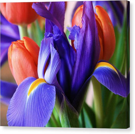 Iris And Tulips Canvas Print