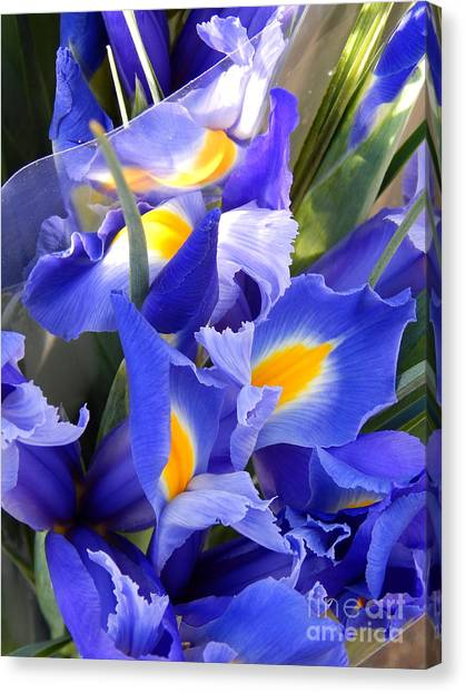 Iris Blues In New Orleans Louisiana Canvas Print