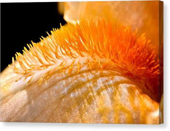 Iris Caterpillar Canvas Print