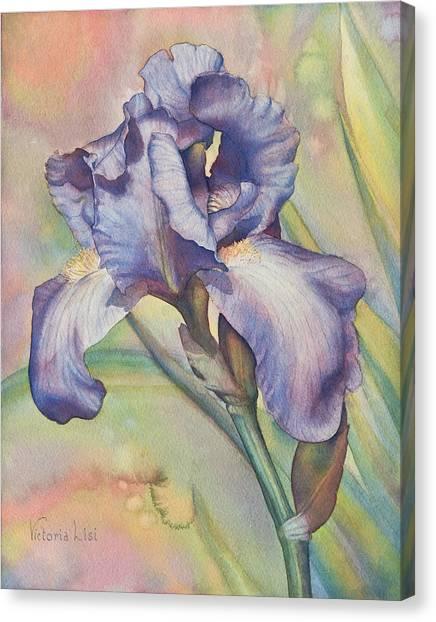Iris Dreaming Canvas Print