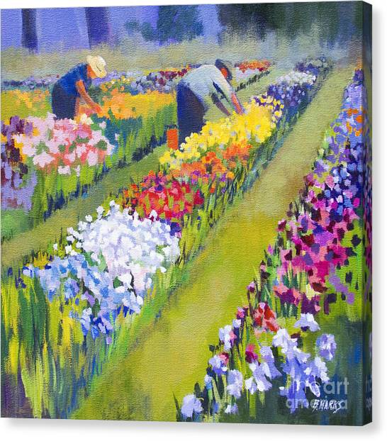 Iris Farm Canvas Print by Bernard Marks