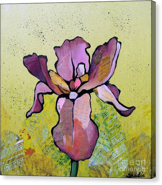 Irises Canvas Print - Iris II by Shadia Derbyshire