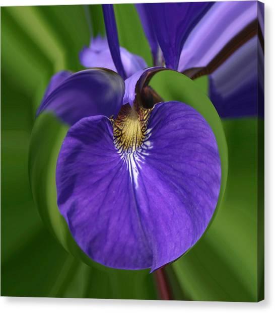 Iris Leaf Canvas Print