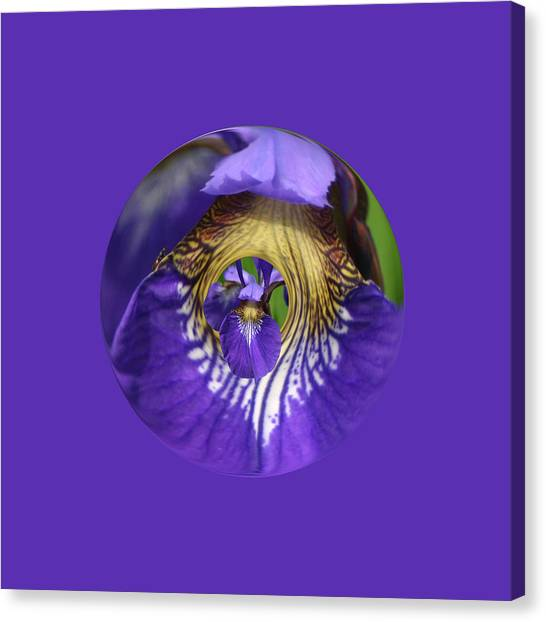 Iris Leaf Loop Canvas Print