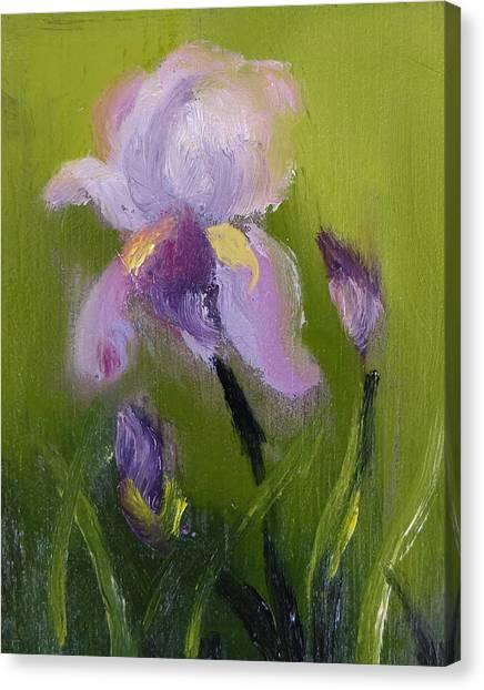 Iris Miniature Canvas Print