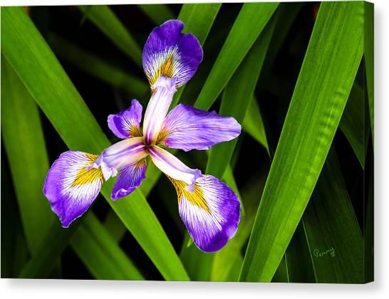 Iris Pinwheel Canvas Print
