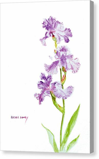 Iris Trio Canvas Print