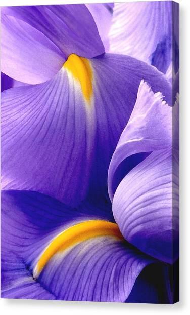 Iris Vi Canvas Print