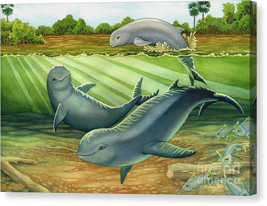 Irrawaddy Or Mekong River Dolphin Canvas Print by Tammy Yee