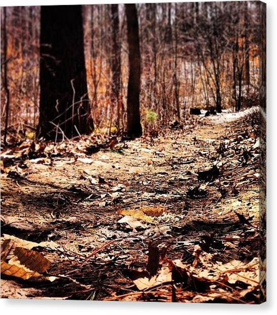 Forest Paths Canvas Print - Is It Me, Or Does This Look More Like by Krista Duke