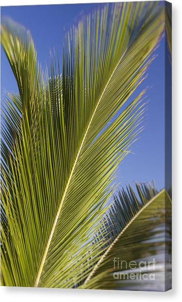 Canvas Print featuring the photograph Isabel Beach In Puerto Rico Palm Trees Against Blue Sky by Bryan Mullennix