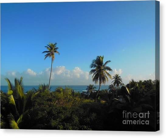 Mango Tree Canvas Print - Puerto Rico by Eloise Schneider Mote