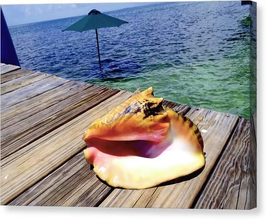 Conch Canvas Print - Island Conch by Carey Chen