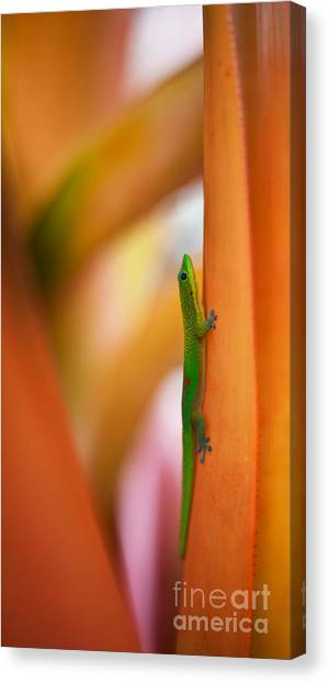 Salamanders Canvas Print - Island Friend by Mike Reid