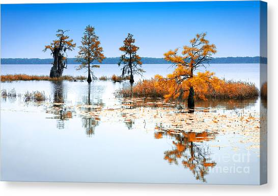 Great Cypress Canvas Print - Isle Of Peace - North Carolina by Dan Carmichael