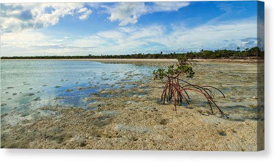 Mud Canvas Print - Isolated by Chad Dutson