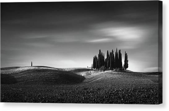 Cypress Canvas Print - Isolation II by Oscar Lopez
