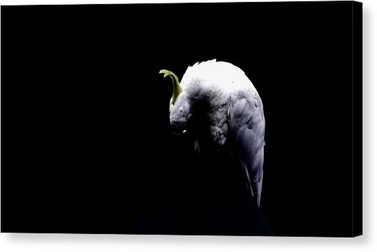 Isolation Canvas Print by John Monteath