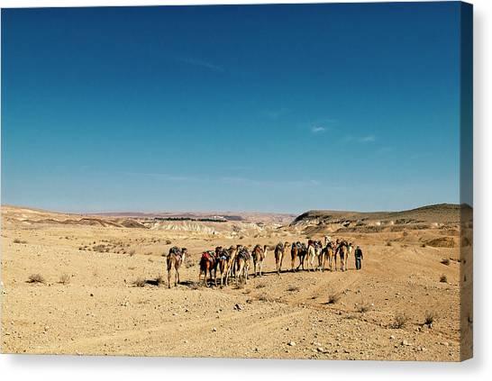 Negev Desert Canvas Print - Israel, Negev Desert by David Noyes