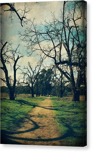 Sycamore Canvas Print - It All Depends by Laurie Search