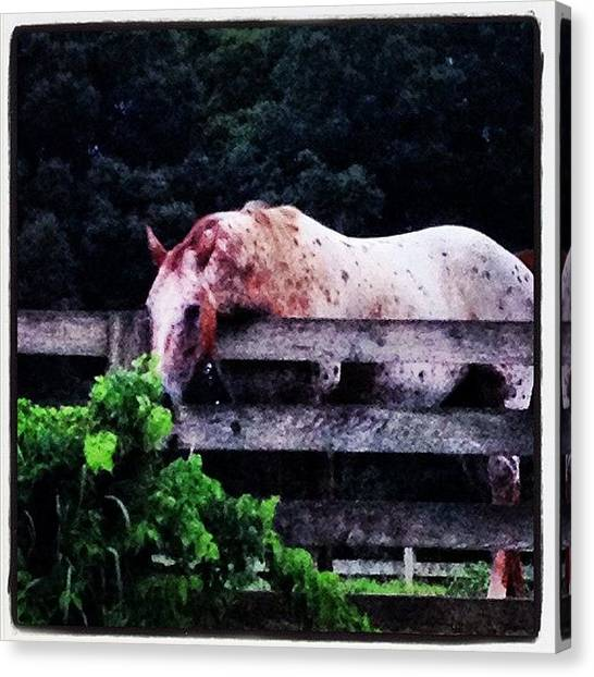 Horse Farms Canvas Print - It Is Just Always Greener by Lydia Dubuisson