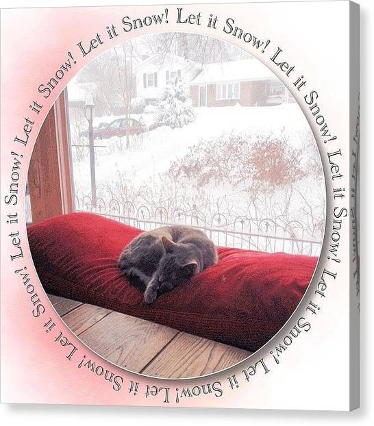 Kittens Canvas Print - It Is #snowing Again And #pixie Could by Teresa Mucha