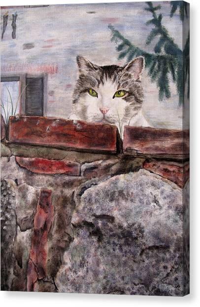 Italian Cat Canvas Print by Karen Peterson