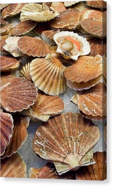 Fish Market Canvas Print - Italy, Venice Display Of Fresh Scallops by Jaynes Gallery