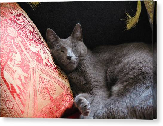 its a cats Life Canvas Print by Debbie Cundy