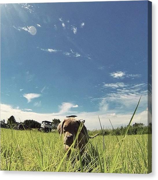 Mastiffs Canvas Print - It's A Dog's Life. // #dog #puppy by Brodie Mccabe