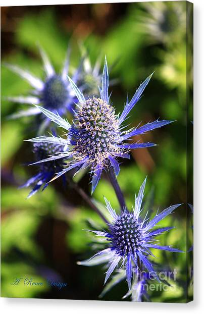 Its A Spiney Life Canvas Print