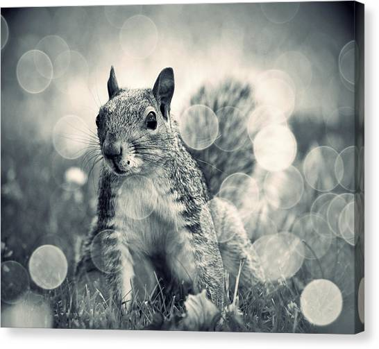 It's A Squirrel's World Too Canvas Print