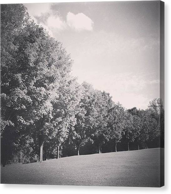Jerseys Canvas Print - It's All So Clear #trees #park by Red Jersey