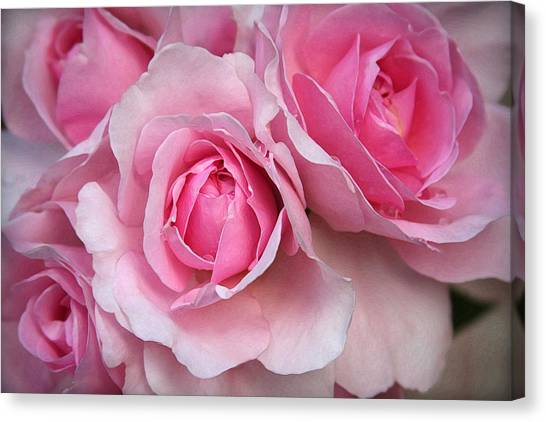 It's Bloomin' Pink Canvas Print by CarolLMiller Photography