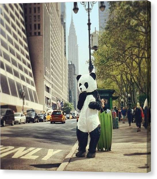 Panda Canvas Print - It's Literally 93 Degrees In #nyc by Cooper Naitove