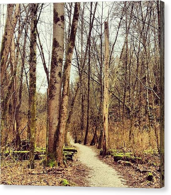 Forest Paths Canvas Print - It's Weird How I Feel Like A Local by Krista Duke