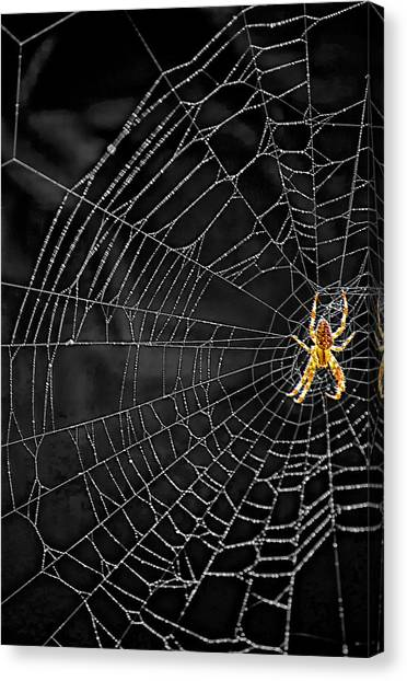 Insects Canvas Print - Itsy Bitsy Spider My Ass 3 by Steve Harrington