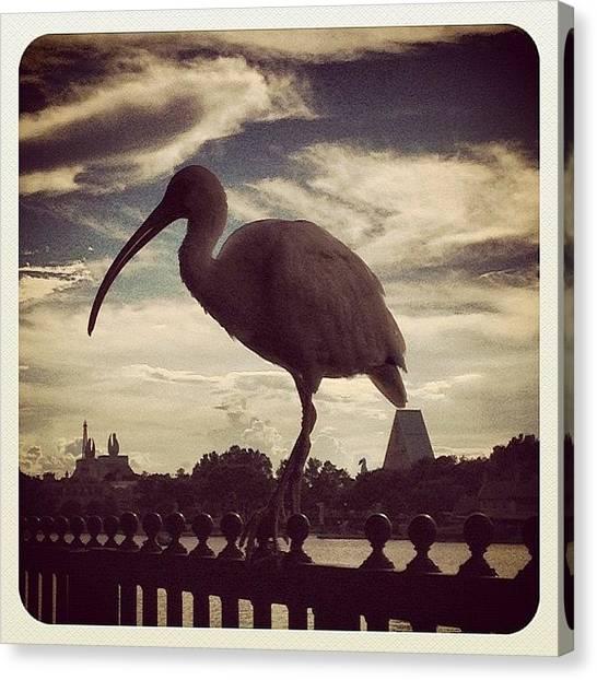 Ibis Canvas Print - I've Got My Ibis On You by K Freiheit