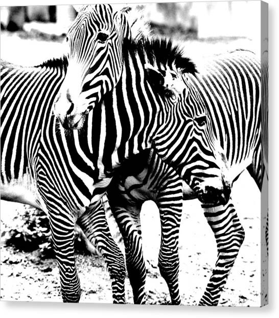 I've Got Stripes Canvas Print
