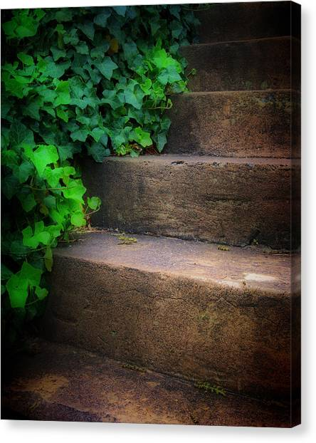 Ivy Beside Steps Canvas Print